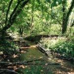 bois cure ruisseau